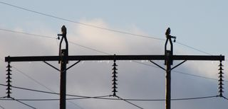 HawksOnPowerLines