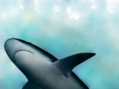SharkCJH-1024x768