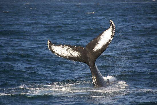 WhaleWatching-2011-0423