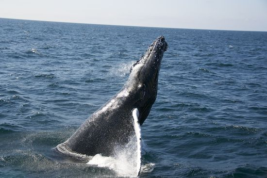 WhaleWatching-2011-0251