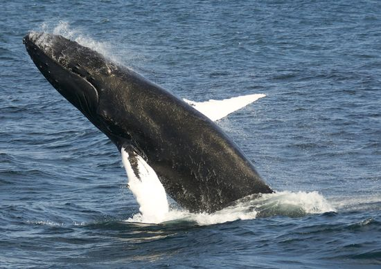WhaleWatching-2011-0332