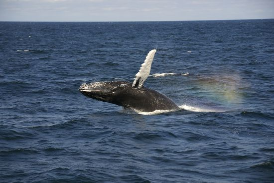 WhaleWatching-2011-01