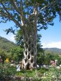 Perfecttree