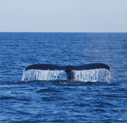 Whaletail5