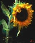 Jeffhayes_sunflower